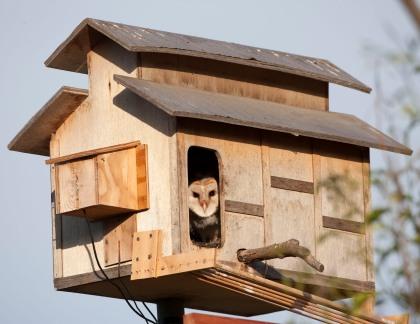Owlet 4D5Q7830