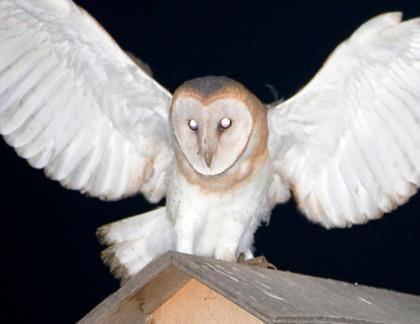 4D5Q8419 Open Wings