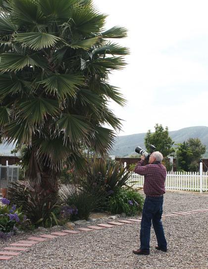 IMG_2740 Carlos Palm Tree